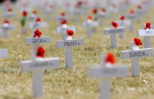 Poppies on soldiers' graves in Flanders Fields
