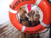 cunard dog cruises