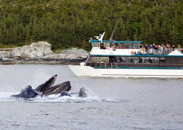 Cunard Queen Elizabeth whale watching