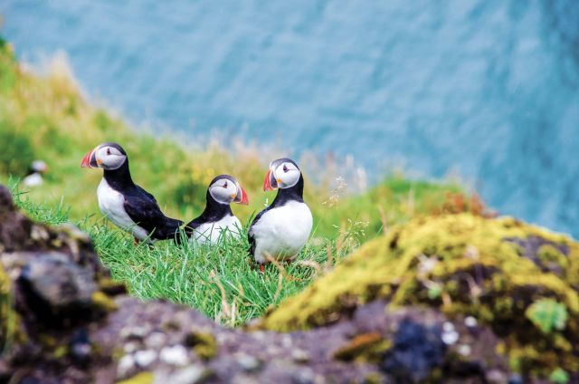 Three birds Lindblad Expeditions National Geographic cruise ship