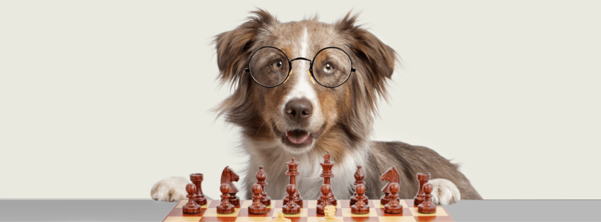 A dog with glasses on