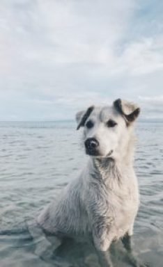 White dog in the water