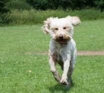 white bouncing dog