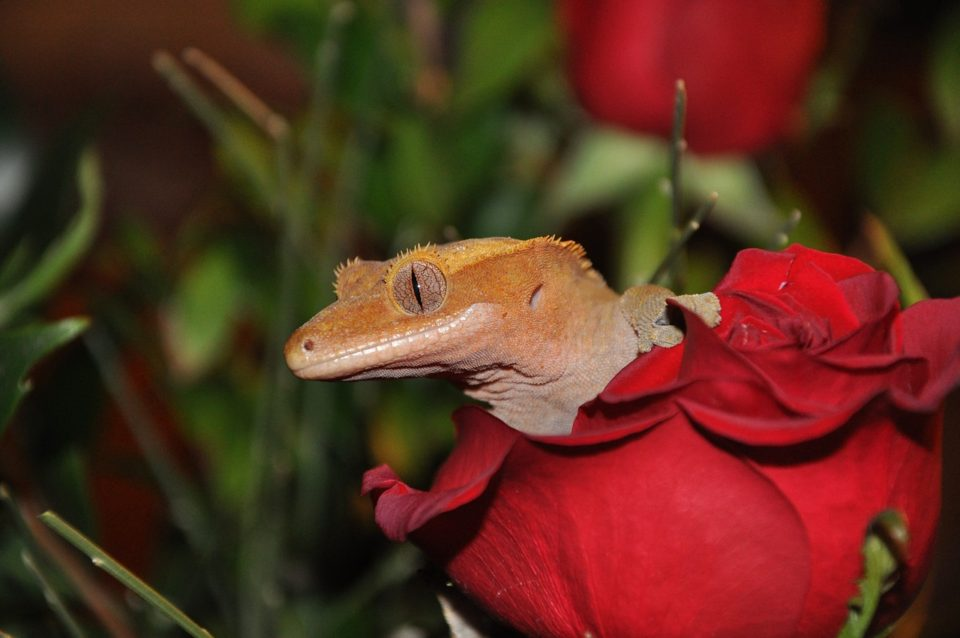 Small reptile