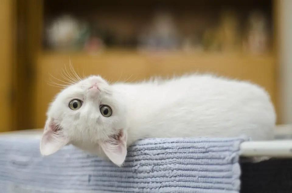Cat posing for a camera