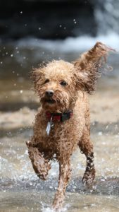 small dog in water