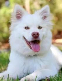A cute white dog