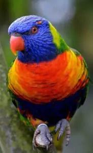 A pet bird
