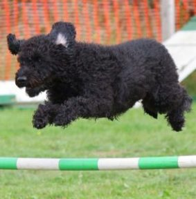 A dog jumping