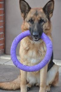 Brain training dog