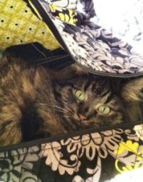 Cat in a luggage bag