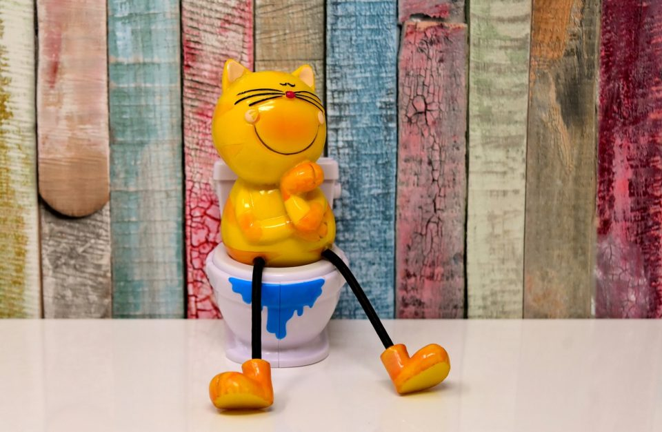 Cat on the potty