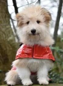 A dog in a coat