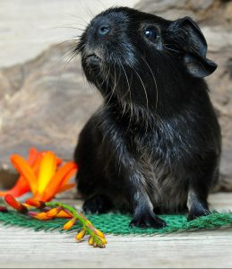 A small black mammal