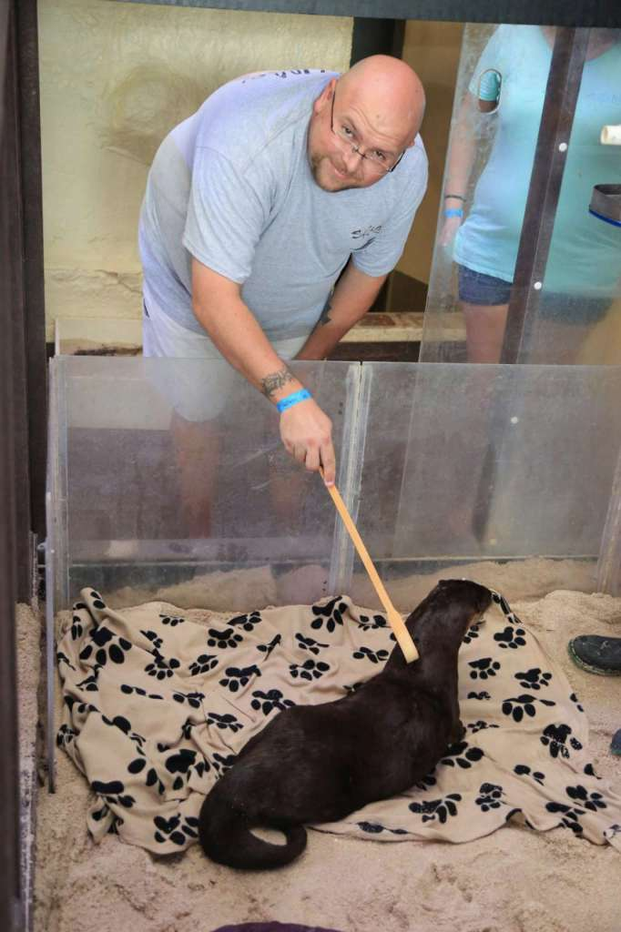 Dolphin and Animal Care Assistant Program Review At Clearwater Marine Aquarium