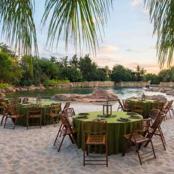 Dine alongside Dolphins during Paradise Nights at Discovery Cove!