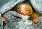 Sloth2_1