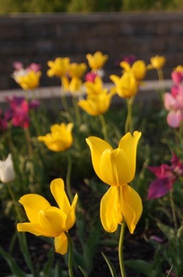 yellow tul 2 offshoots12.com