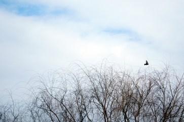 winter bird http://offshoots12.com