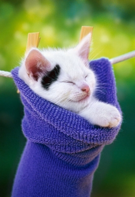kitten in cotton sock