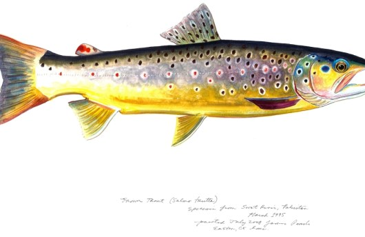 Brown Trout (James Prosek)