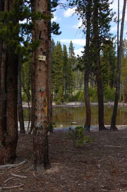 Posted miles indicate distance from Norris campground.