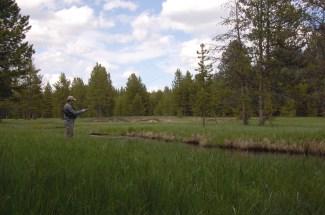Fishing Solfatara Creek