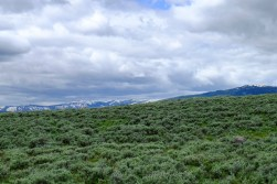 Beautiful sagebrush fields