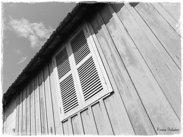 Foto: Rosea Bellator. Pense no oráculo como uma janela que não fica sempre aberta, mas você consegue dar uma espiada. Cada dia que você der uma espiada vai aparecer algo diferente, portanto não tente associar o que viu em um dia ao que viu no outro.