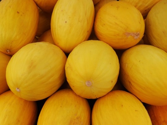 Você sabia que a casca tem mais fibras, cálcio, potássio e fósforo do que a polpa? Consuma a casca do melão! Foto: Rosea Bellator.