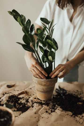 person arranging pot plant