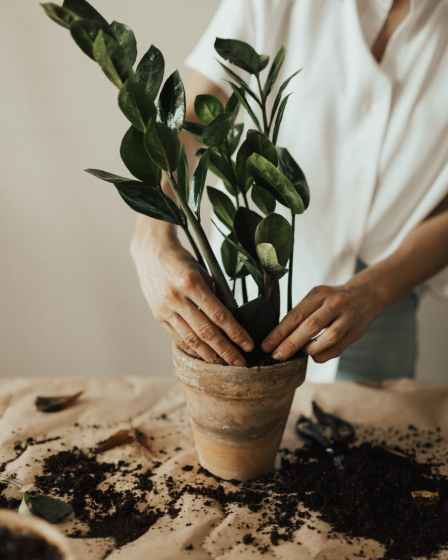 person arranging pot plant