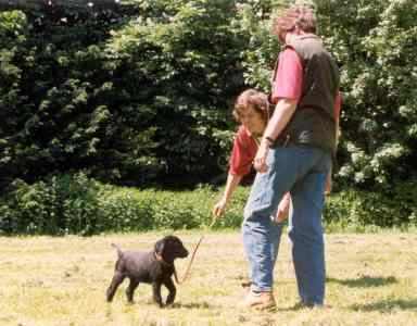 puppy-training-bij-erica