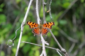Green Comma side two - the pretty side!