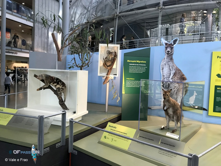 museo della scienza san francisco valeria cagnina francesco baldassarre ofpassion