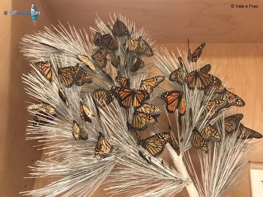 museo della scienza farfalle california san francisco valeria cagnina francesco baldassarre ofpassion