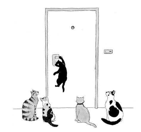 מין חתולה את יוסף 5