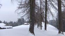Eine Bergallee aus Lärchen auf der Krete des Sonnenbergs - The crest trail on the Sonnenberg near Lucerne, lined by majestic larch (tamarack) trees.