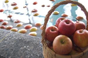 たくさんりんご