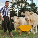 Job Opening for Dairy Farmer in Japan