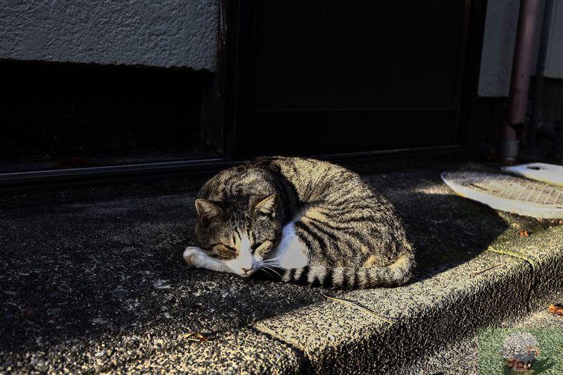やる気が無い月曜日なので日光浴びながら散歩した