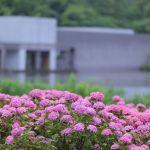 【飯森山公園】カサを持ってあじさいを撮りに【土門拳記念館】