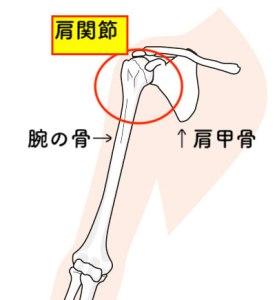 肩関節の図