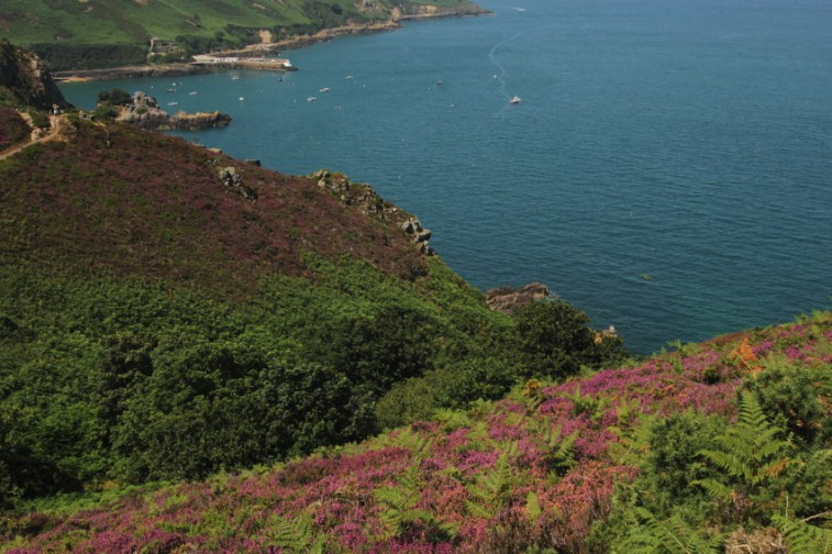 purple Bouley Bay