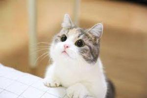 貓咪踏踏原因