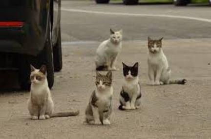 為什麼不直接把貓咪捕捉並且安樂死?
