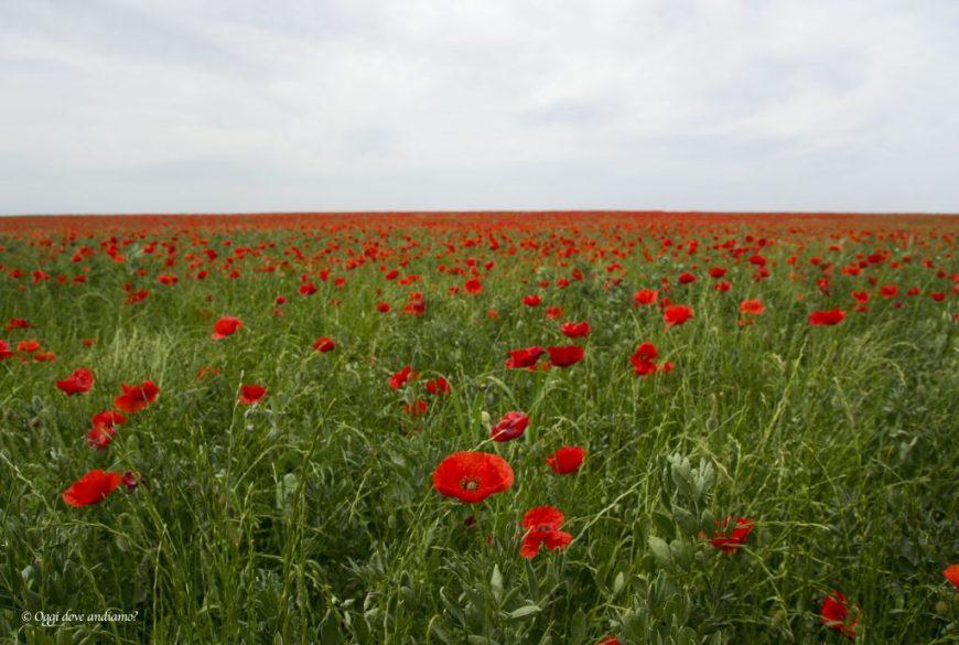 Le campagne intorno a Cerignola