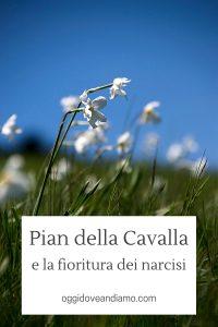 Pian della Cavalla e la fioritura dei narcisi