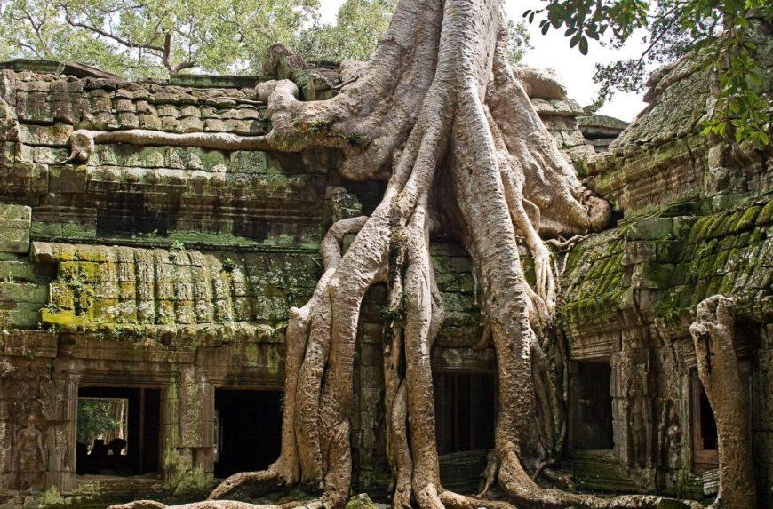 Il tempio di Ta Prohm, Angkor