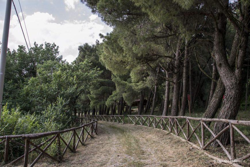 Bosco Acquara Orsara di Puglia